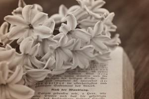 El Día de la Madre. Libros Para Regalar.